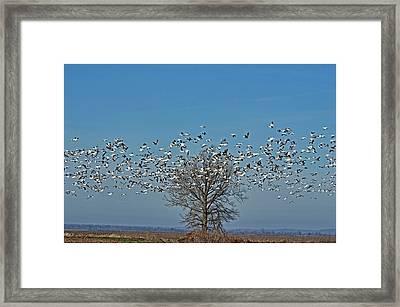 Wild Geese IIi Framed Print by Debbie Portwood