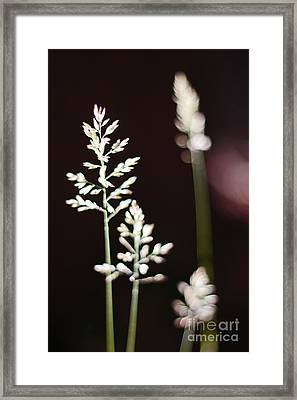 Framed Print featuring the photograph Wild Grass by Andy Prendy