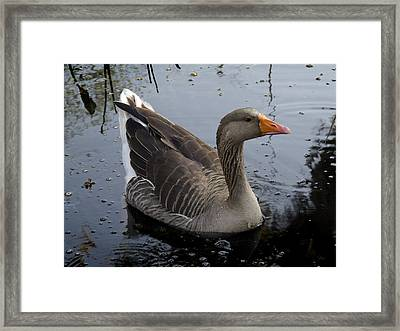 Framed Print featuring the photograph Wild Greylag Goose by Lynn Palmer