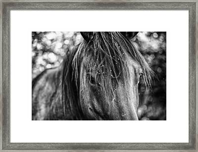 Wild Hair Framed Print