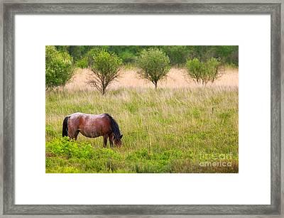 Wild Horse Grazing Framed Print by Richard Thomas
