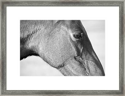 Wild Horse Intimate Framed Print by Bob Decker