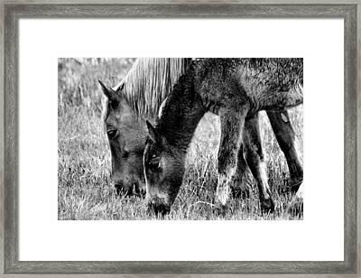Wild Horses 1 Framed Print by Mickey Hatt