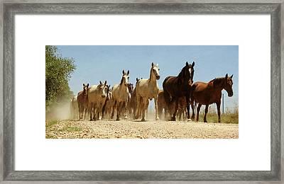 Wild Horses Framed Print by Antonio Arcos Aka Fotonstudio Photography