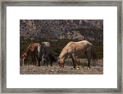 Wild Horses Bighorn Canyon National Recreation Area Framed Print by Benjamin Dahl