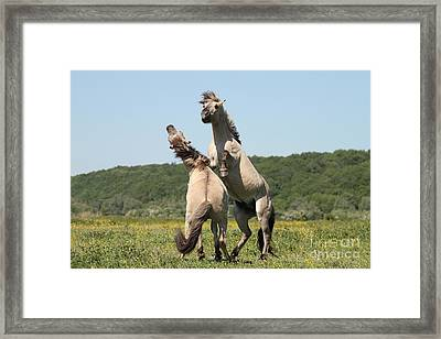 Wild Horses Framed Print by Masterbrickert Photography