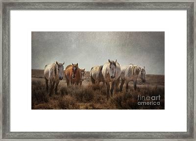 Wild Horses Roam Framed Print by Heather Swan