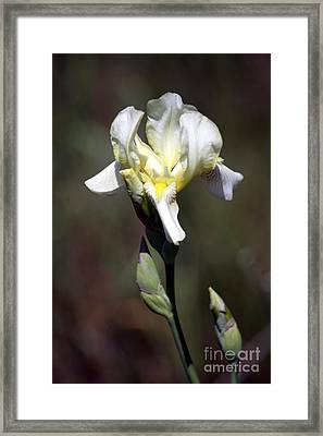 Wild Iris At Dusk Framed Print by Inspired Nature Photography Fine Art Photography