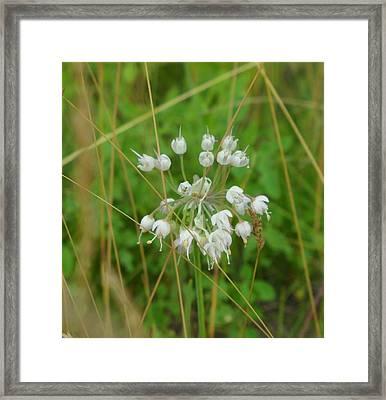 Wild Leek Framed Print