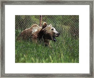 Wild Life Safari Bear Framed Print