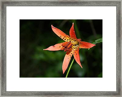 Framed Print featuring the photograph Wild Lilly by Laurinda Bowling