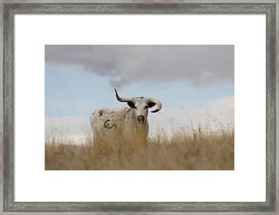 Wild Longhorn Framed Print
