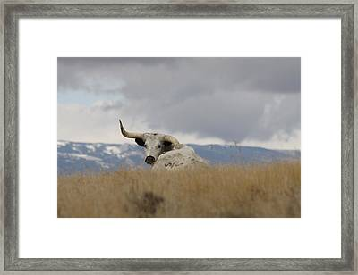 Wild Momma Framed Print