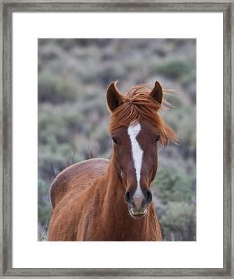 Wild Mustang Framed Print
