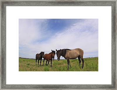 Framed Print featuring the photograph Wild Mustangs On The High Plains by Kate Purdy