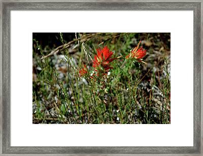 Wild Paint Brush Framed Print