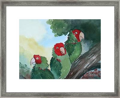 Wild Parrots Of Telegraph Hill Framed Print