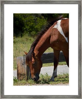 Wild Pony Snack Time Framed Print by William Bartholomew
