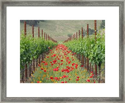 Wild Poppy Framed Print