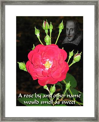 Wild Rose And The Bard Framed Print by Terry Lynch
