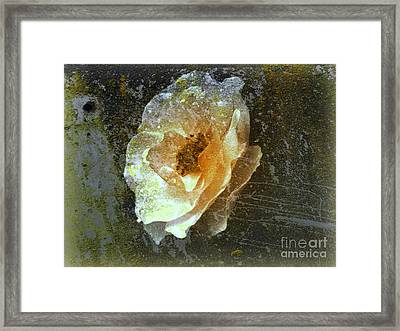 Framed Print featuring the digital art Wild Rose by Irina Hays