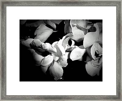Wild Roses In Black And White Framed Print by Beth Akerman