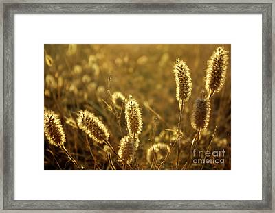 Wild Spikes Framed Print by Carlos Caetano