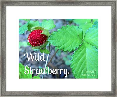 Wild Strawberry Poster Framed Print