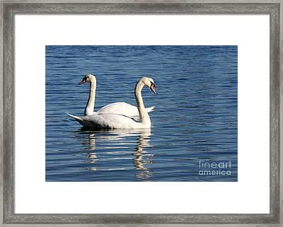 Wild Swans Framed Print