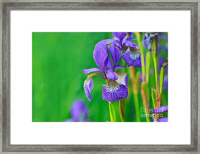Wild Thing Framed Print by Beve Brown-Clark Photography
