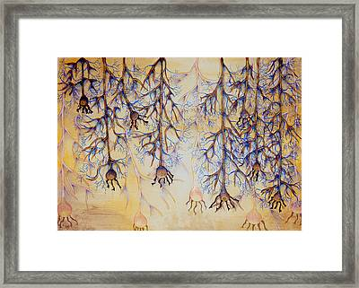 Wild Thoughts Framed Print by C  Autumn Trapp