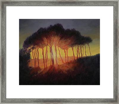 Wild Trees At Sunset Framed Print by Antonia Myatt