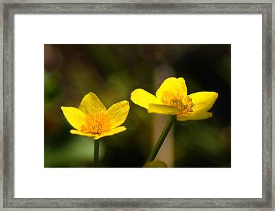 Wild Yellows Framed Print by Bill Pevlor