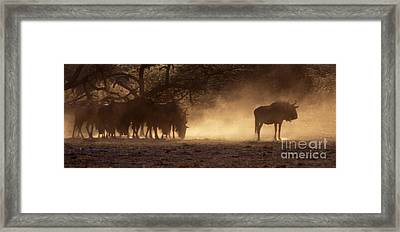Framed Print featuring the photograph Wildebeests In The Dust - Botswana by Craig Lovell