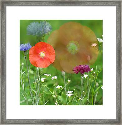 Wildfade Framed Print by Debra     Vatalaro