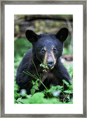 Wildflower Bear Framed Print