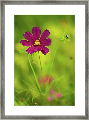 Wildflower Framed Print by Image by Rebecca Weaver, RWeaverNest Photography