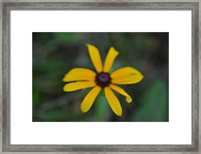 Wildflower Framed Print by Mark Stidham