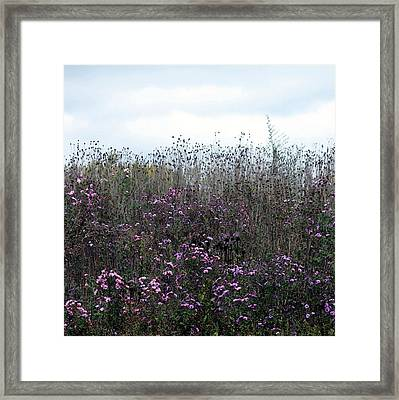 Wildflower Meadow At Markin Glen Framed Print