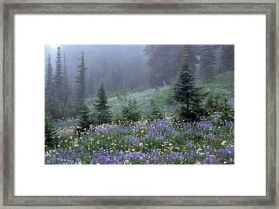 Wildflower Meadow Mt Rainier Framed Print by Tom and Pat Cory
