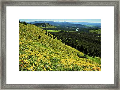 Wildflower Mountain In Wyoming Framed Print by Jeff R Clow
