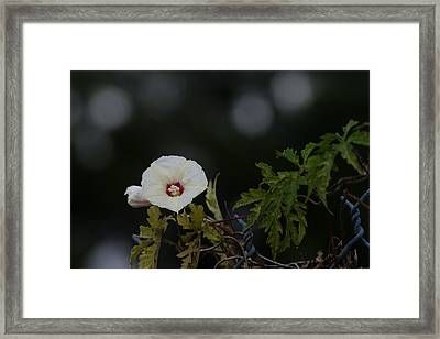Framed Print featuring the photograph Wildflower On Fence by Ed Gleichman