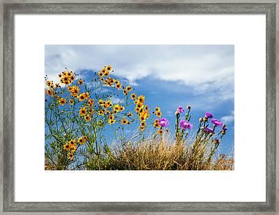 Wildflower Weed Framed Print by Tamyra Ayles