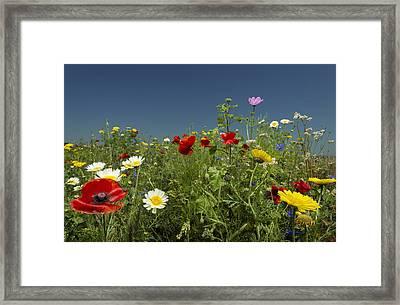 Wildflowers Growing In Rural Field Framed Print