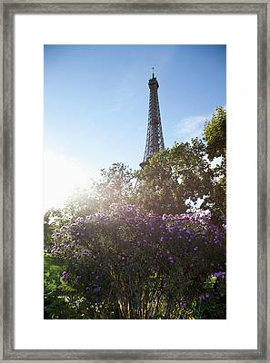 Wildflowers In Front Of The Eiffel Tower Framed Print
