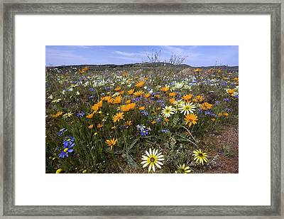 Wildflowers In South Africa Framed Print by Bob Gibbons