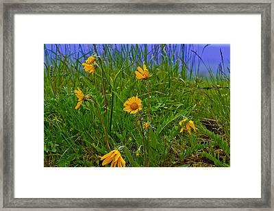 Wildflowers Framed Print by Jen TenBarge