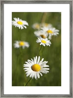 Wildflowers Framed Print by Kathryn Mayhue