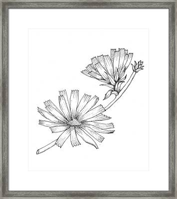 Wildflowers Framed Print by Marci Mongelli