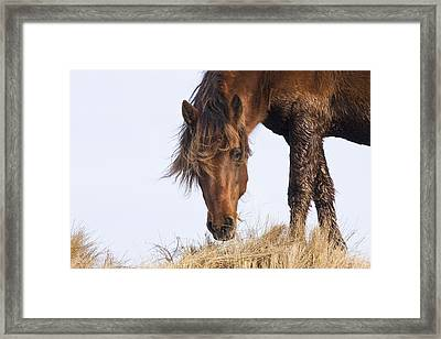 Wildhorse On The High Dunes Framed Print by Bob Decker